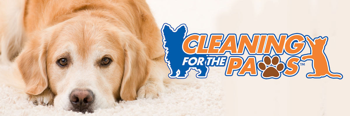 cleaning for the paws with dog banner