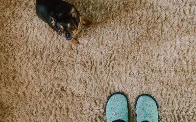 Replacing Carpets Soon? Learn What Kinds Are Best For Kids & Pets